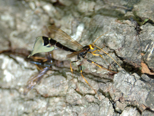 how to kill ground wasps